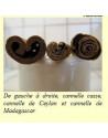 Cannelle parfumée de Madagascar