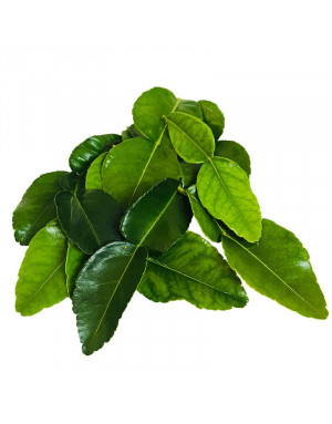 Kaffir Leaves from Madagascar