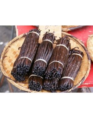 vanille de Comores 17-19 cm