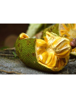 jackfruit from Madagascar