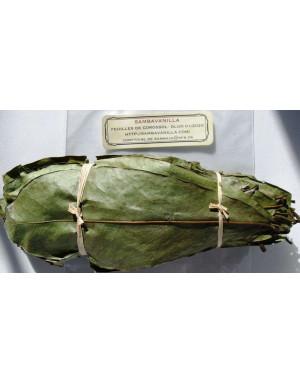 feuilles de corossol séchées