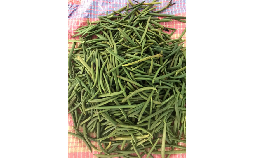 First harvest of green vanilla for the 2020 season
